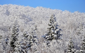 Picture winter, forest, the sky, snow, spruce, slope