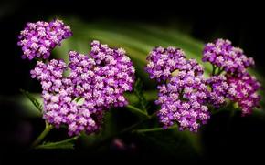 Picture flowers, nature, plants