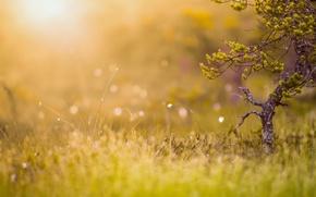 Picture summer, grass, light, nature