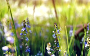 Picture greens, field, grass, flowers, earth, plants, meadow