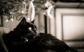 Picture cat, black, black and white, six