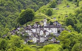 Picture greens, grass, trees, mountain, home, Switzerland, slope, Canton Ticino, Locarno