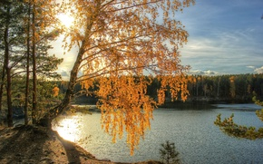 Picture autumn, the sun, light, river, birch