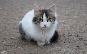 Picture cat, asphalt, cute, kitty
