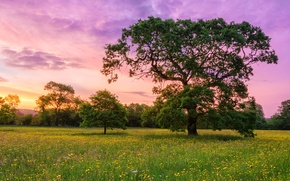 Picture the sky, clouds, flowers, tree, meadow