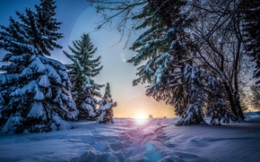 Picture winter, the sun, snow, trees, sunset, the evening, ate