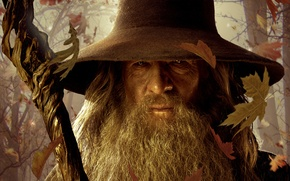 Picture The Lord of the rings, staff, The Lord of the Rings, Gandalf, fallen leaves, Gandalf, …