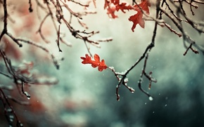 Picture autumn, leaves, snow, branches, nature, branch
