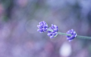 Picture flower, sprig, background, lilac, bokeh, field