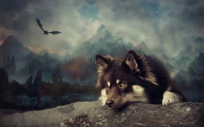 Picture dog, art, Finnish lapphund