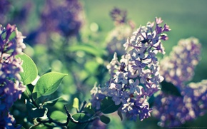 Picture light, nature, spring, flowering, lilac, bokeh, for Lita