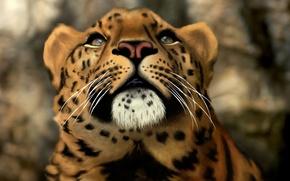 Picture cat, face, predator, head, art, leopard, wild