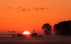 Picture sunset, birds, fog
