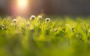 Wallpaper flowers, flowers, widescreen, blur, HD wallpapers, Wallpaper, greens, full screen, flower, the sun, background, fullscreen, ...