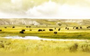 Picture field, river, Buffalo