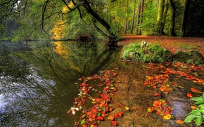 Wallpaper forest, plants, nature, trees, leaves, rivers, autumn, autumn, water, trees, water, nature, forest