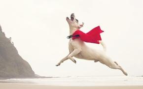Picture wave, beach, flight, rocks, jump, dog