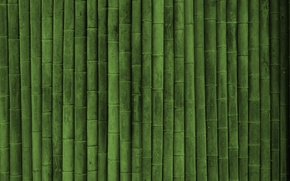 Picture bamboo, texture green style