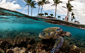 Picture sea, palm trees, turtle