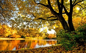 Picture yellow, foliage, river, trees, branches, autumn, forest