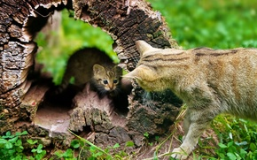 Picture cat, kitty, tree, stump, dialogue, dry