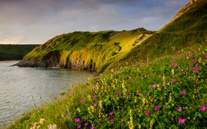 Picture sea, flowers, coast, UK, Wales