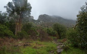 Picture storm, nature, fog, mountain, storm, Nature, mountain, fog, path