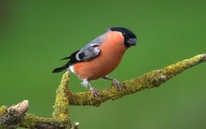 Wallpaper bird, color, branch, feathers, beak