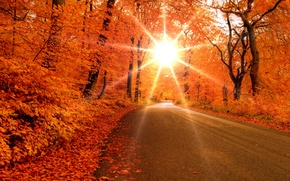 Wallpaper road, forest, leaves, the sun, rays, trees, Autumn