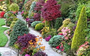 Picture flowers, design, lawn, garden, track, benches, the bushes, benches, tables