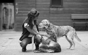 Wallpaper friendship, girl, dogs, plays, black and white, frendship, devotion