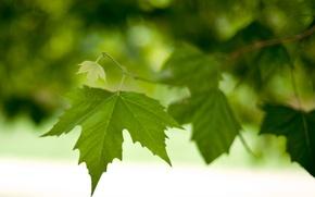 Wallpaper leaves, macro, branch, leaves, bokeh, foliage, green, spring