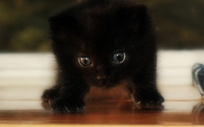 Picture cat, light, kitty, black, shadow
