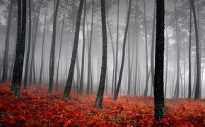 Wallpaper fog, trees, grass, red