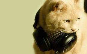 Picture cat, macro, headphones