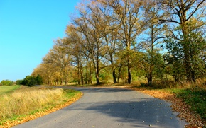 Picture road, foliage, Autumn