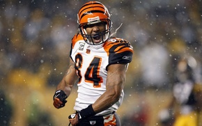 Picture American football, player, Tj Houshmandzadeh