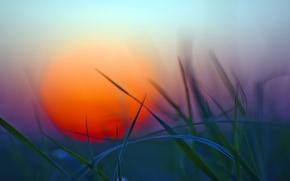 Wallpaper greens, grass, sunset, The sun