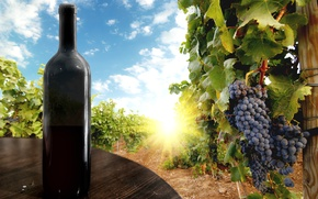 Picture the sky, leaves, the sun, clouds, berries, table, wine, black, bottle, grapes, bunch, vineyard, black, …