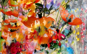 Picture flowers, Mac, petals, garden, meadow