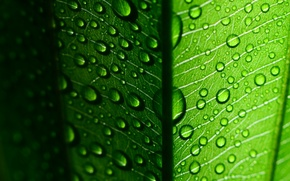 Picture widescreen, leaf, HD wallpapers, Wallpaper, leaf, leaves, green macro, water, full screen, green, background, fullscreen, ...