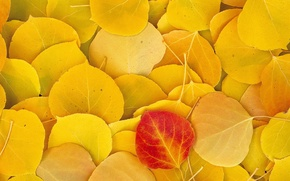 Picture Autumn, Leaves, Yellow