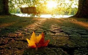 Wallpaper autumn, light, sheet, shop