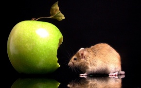 Wallpaper Bite, Mouse, Apple