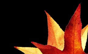 Wallpaper Golden, sheet, autumn, background
