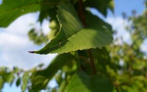 Picture Macro, The sky, Autumn, Leaves, Garden, Cherry, Belarus