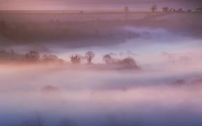 Wallpaper field, trees, nature, fog, pink, England, morning, UK, haze