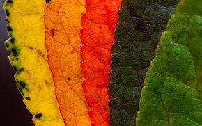 Picture leaves, macro, nature, color