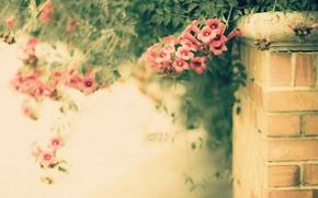 Picture flowers, style, background, the fence, texture