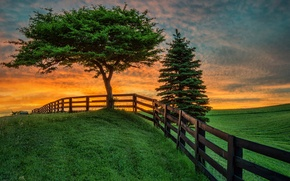 Picture field, summer, landscape, sunset, tree, the fence